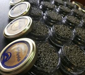 caviar beluga pot en verre, caviar iran, caviar lyon beluga, acheter beluga iran lyon, boutique caviar beluga